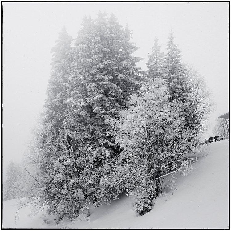 Winter Wonderland Schwedenwüerf - schwedenwuerfel | ello