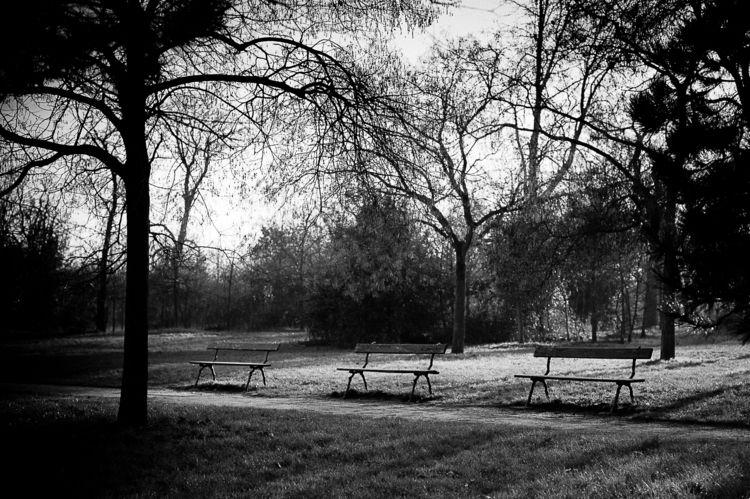 walk Park - winterlight, bnwphotography - flommeunier | ello