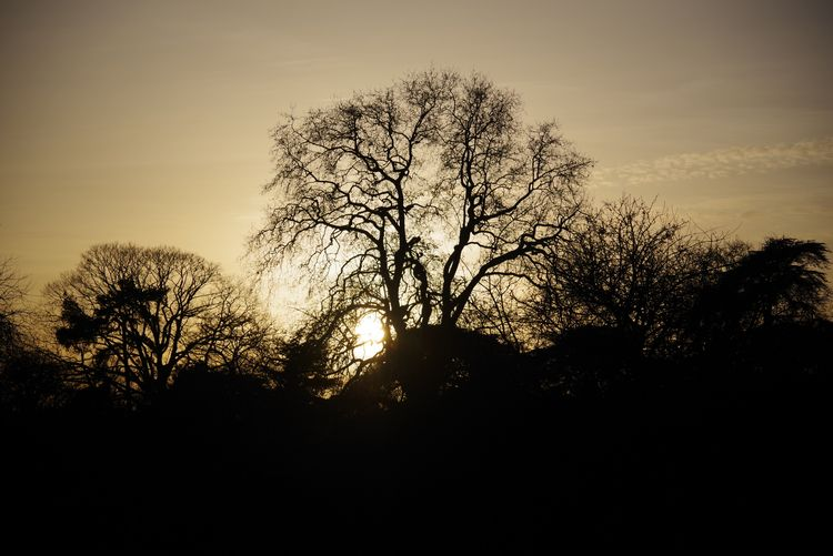 Royal Botanic Gardens Kew - kew - jasmac | ello