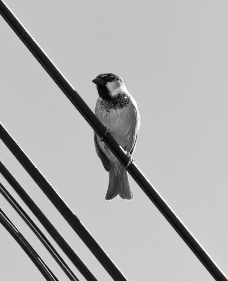 ->Bird lines ->Mexico Cit - macchiavello | ello