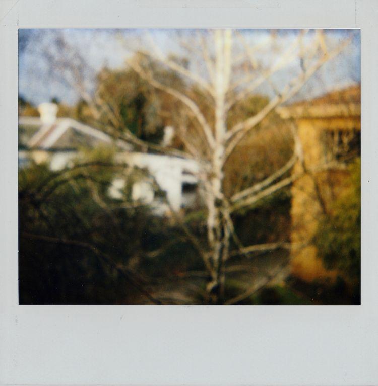 Roid Rage series polaroids 1990 - s2art | ello