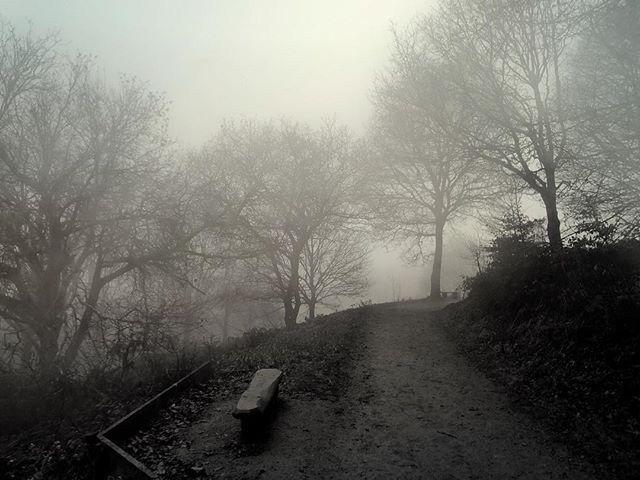 Morning Fog - Iphone, iphoneography - itsrichardjohnson | ello