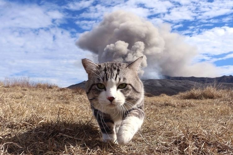 cat hot - ello, smoke, random, capture - darkskieskindeyes   ello