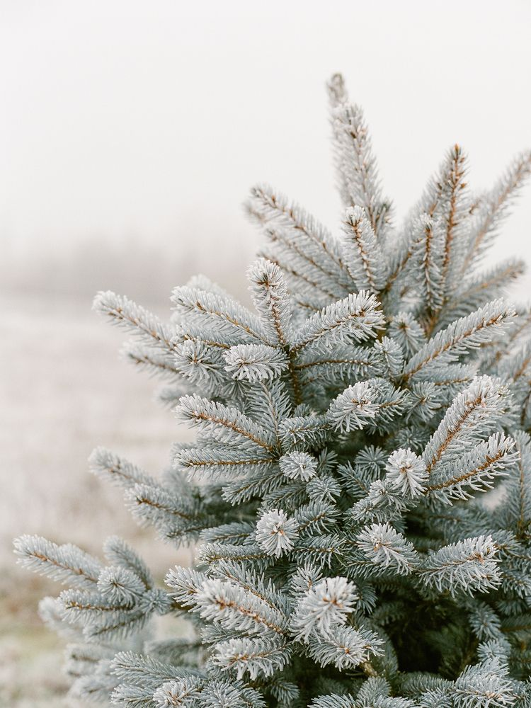 winter. contax 645 / fuji 400 r - _radostina_ | ello