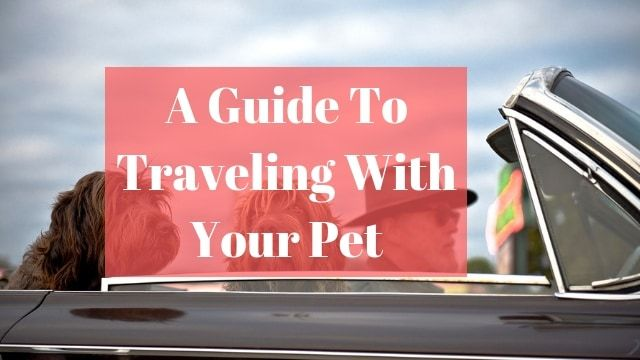 Guide Traveling Pet travel, sen - ultimatelifestyle | ello