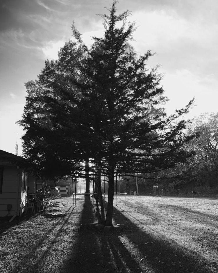 tree, sunshine - nikonredneck | ello