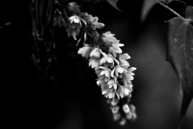 Botanical Monochrome 6006 - flowerphotography - dorian-stretton | ello