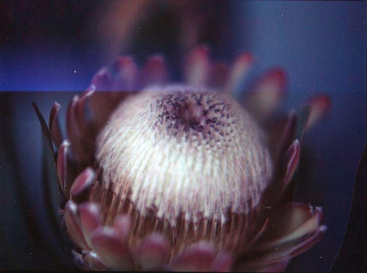 Protea, stands change transform - sonofsimao | ello