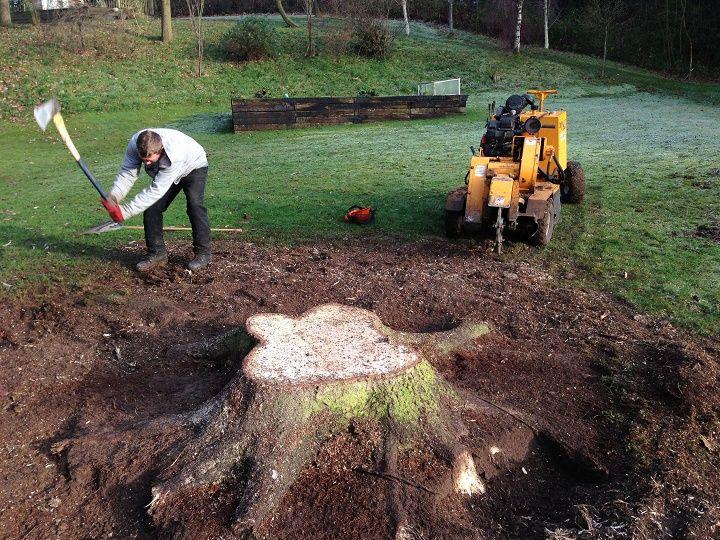 Tree stump grinding service pro - chriss974 | ello