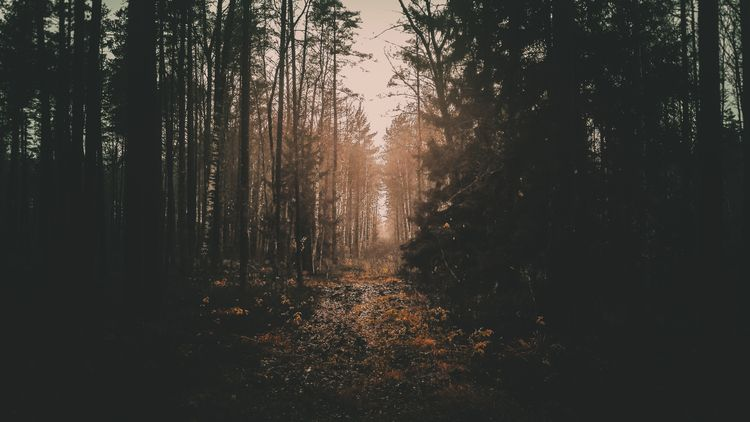 forest, lithuania, november, landscape - beheroght | ello