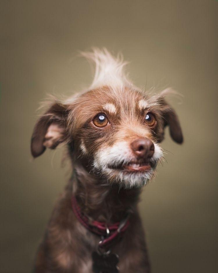 Frankie dog. Pet portrait photo - muttshots | ello