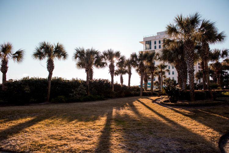 sunset rays - beach, palmtrees, shadows - honeyrevenge-amor | ello
