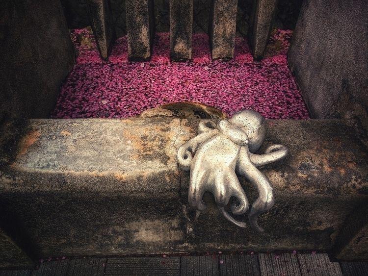 Random street art Atami, octopu - fokality | ello