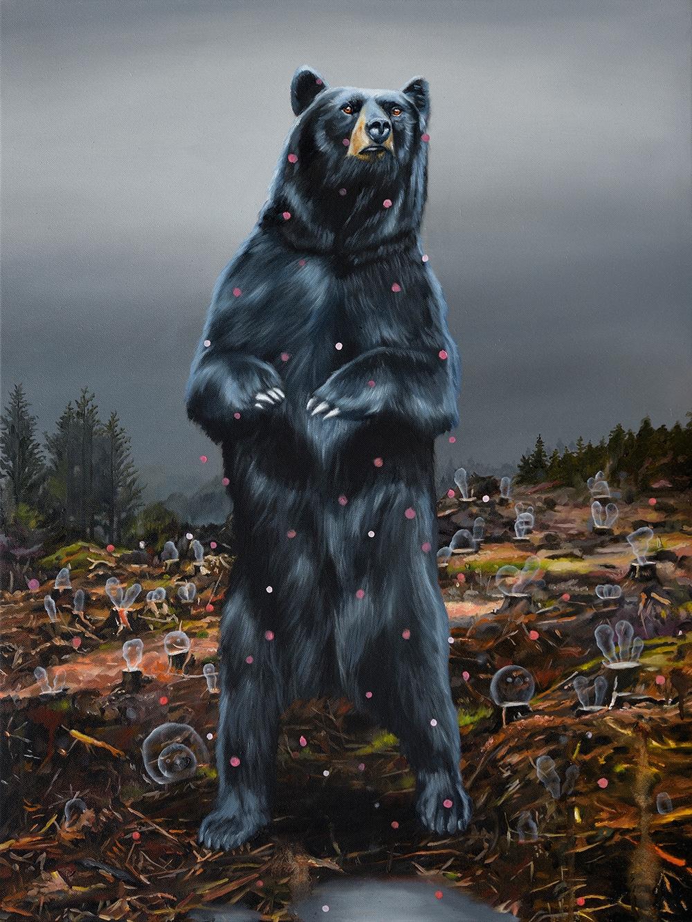 Black Bear, 2019, oil canvas, 6 - heikomuller | ello