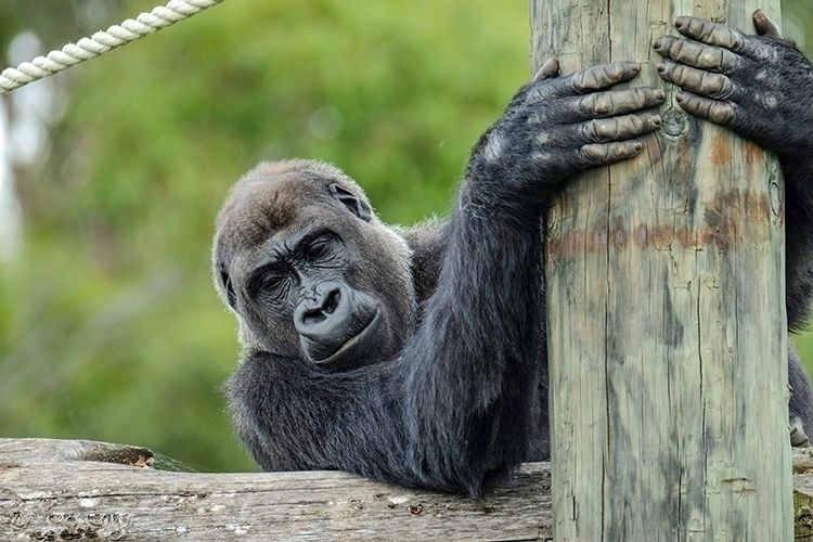 Orana Wildlife Park Christchurc - sean-fleming | ello