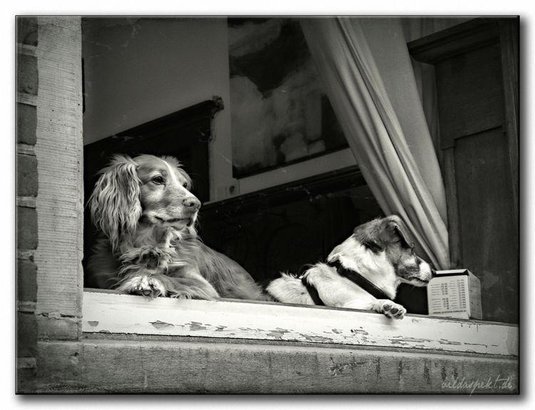 buddies - blackandwhite, bwphotography - bildaspekt | ello