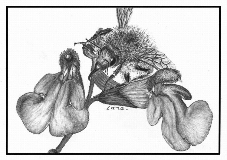 Bumblebee action - graphite, pencil - nourseetcie | ello