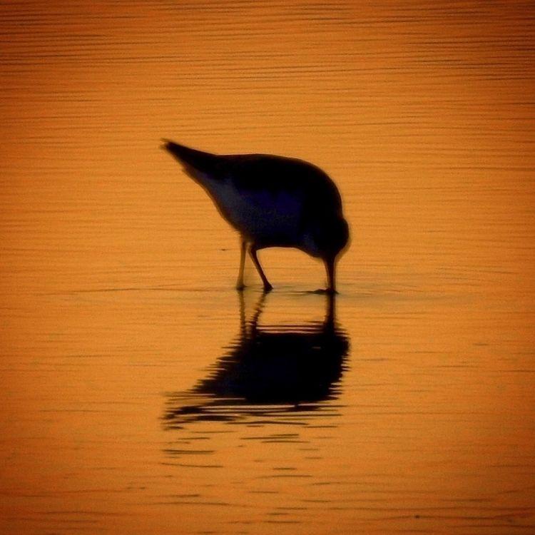 birds, bird, seabirds, oceans - sgehring | ello