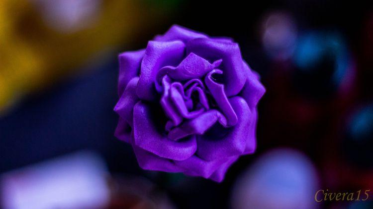 Purple, Flower#Colors, Nature - civera15 | ello