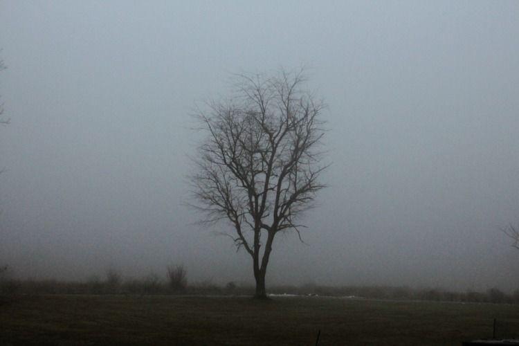 solo - moody, atmospheric, fog, weather - graceauden | ello