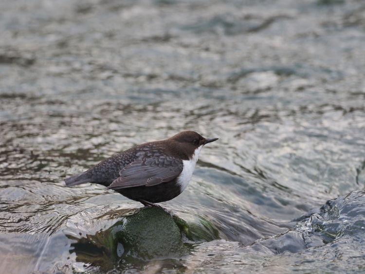 birds, nature, birdphotography - annettespics | ello