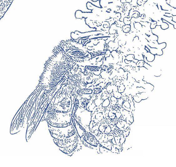 save bees protect ecosystem (sh - morninghomestead | ello