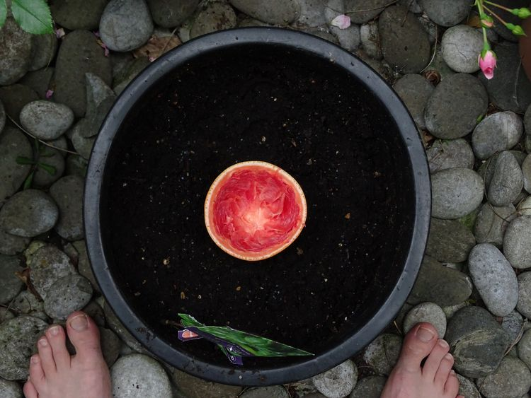de tuin plant ik een geperste p - towami | ello