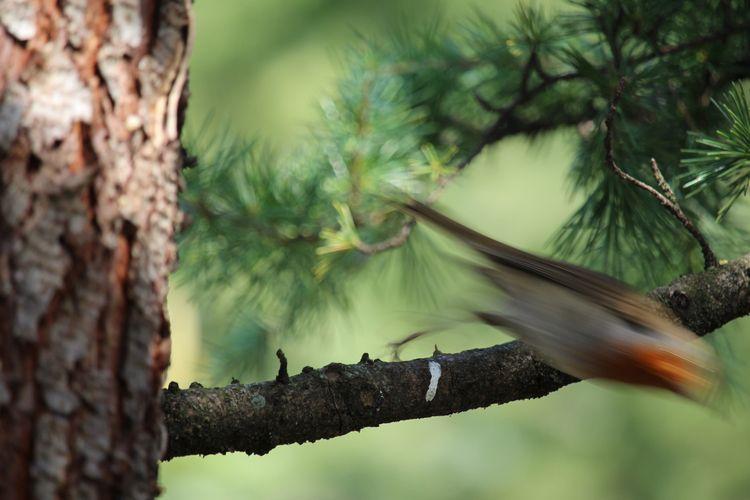 photography, trees, bird - bolkonskaja | ello