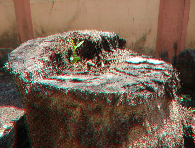Chance. Red-Cyan 3d Photography - anand_v_s   ello