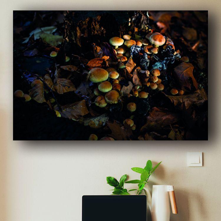Fungus 4 🛒 --&gt - arc1, fineartphotography - arc1   ello
