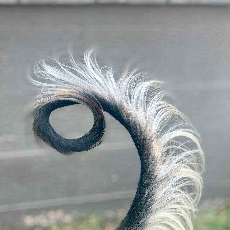 tail, shape, form, afghan, curl - cararae | ello