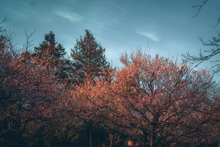 Winter sunset park...  - tokyo, ume - fokality | ello