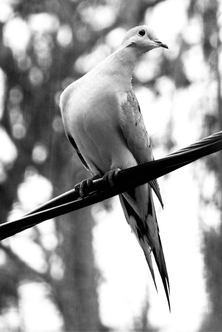 Stretch rainy day dove - Mourning - katemoriarty | ello