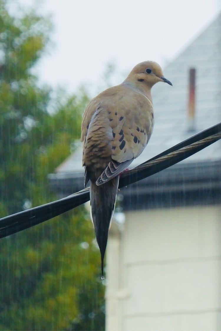 lovely rain jacket dove - Mourning - katemoriarty | ello