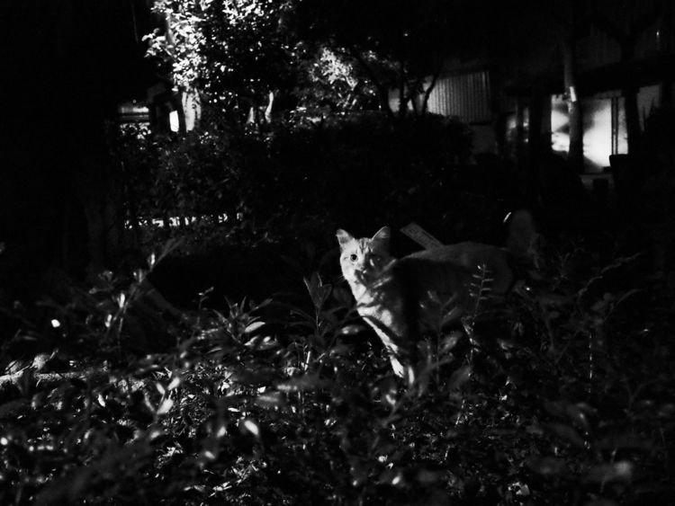 Night cat - gr2, streetphoto_bw - kendou0508 | ello