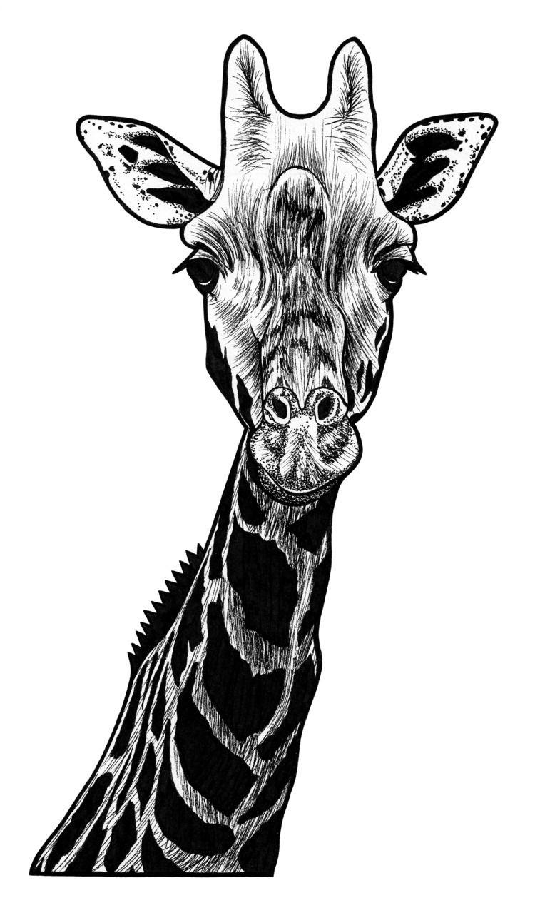 Giraffe - ink illustration - giraffe - lorendowding   ello