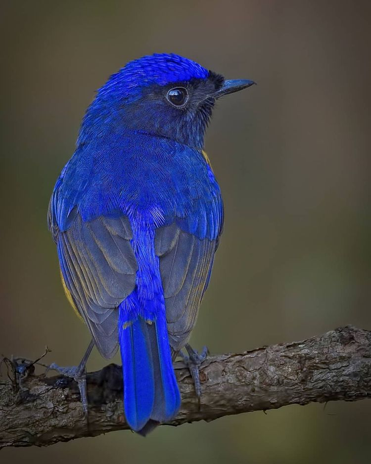 Birds India: Majestic Photograp - photogrist | ello