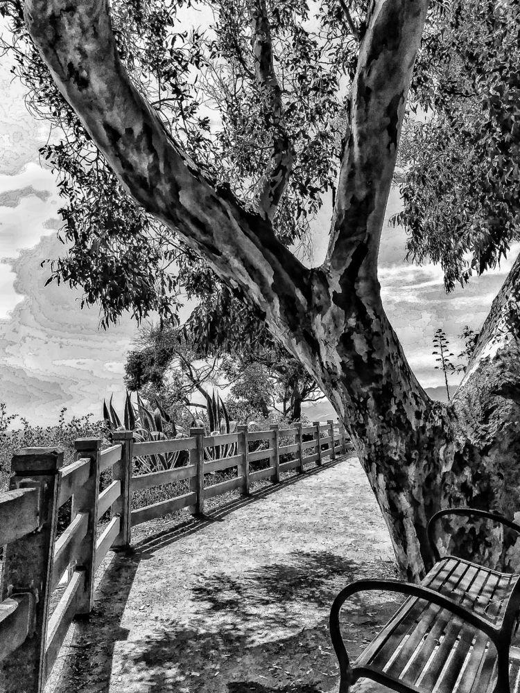 tree, path, shade, fence bench - georgeleon | ello