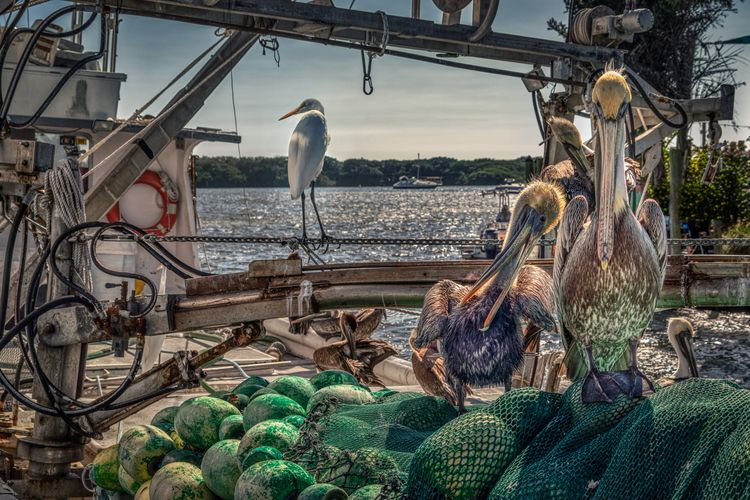 Cortez fishing villages east co - rickschwartz | ello