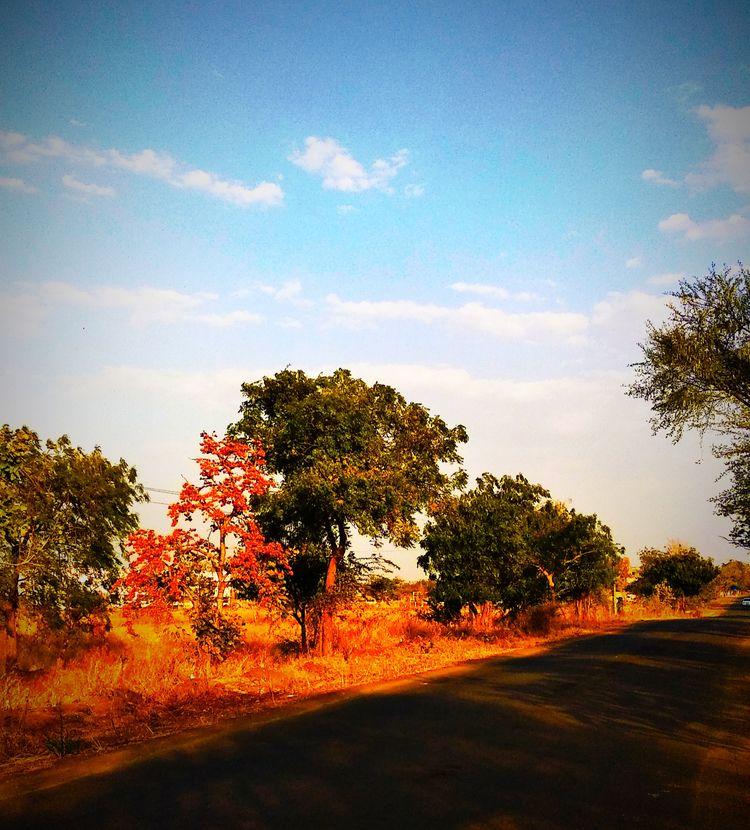 India, Nature, atulbw - atulbw | ello
