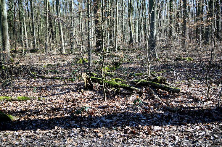 Wildpark Dünnwald XII Kamera: P - walter_ac   ello