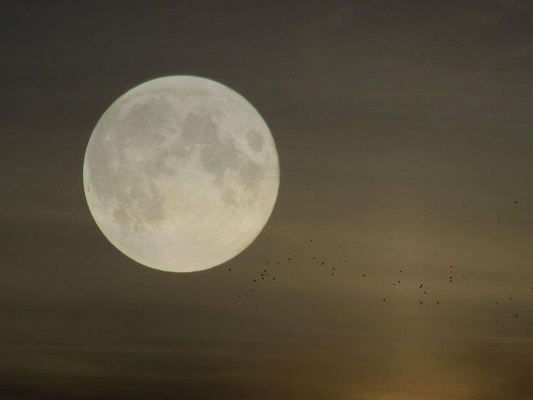 guys! FYI ....Worm moon coming - tehranchik | ello