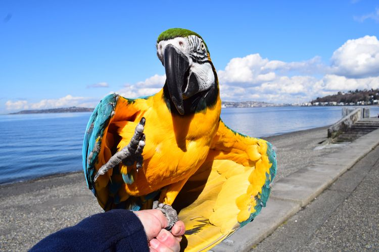 High Blue Gold Macaw Aboo gorge - michaelostrogorsky | ello