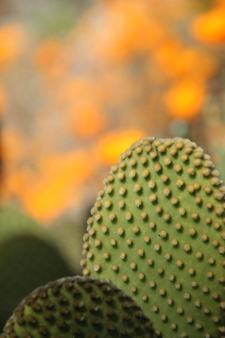 photography, romantic, cactus - pixdreaming | ello