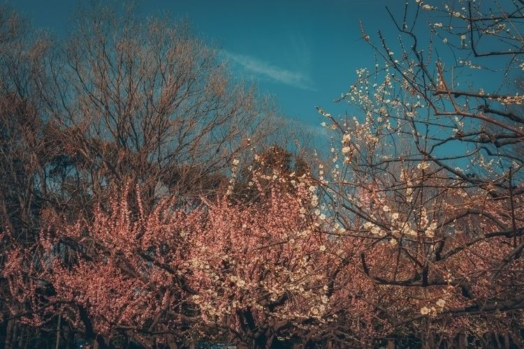 Bring blue sky spring days...  - fokality | ello