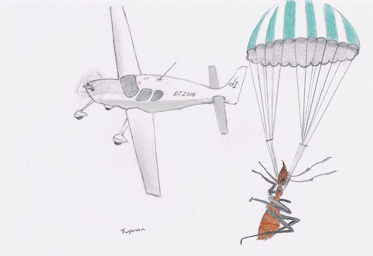 Rescue original 8 10 pencil - drawing - artexpert | ello