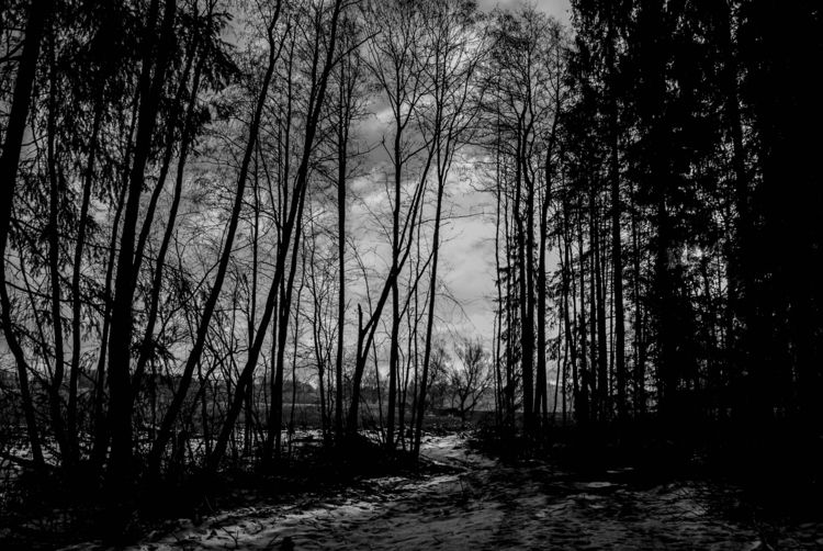 lithuania, lietuva, forest, blackmetal - beheroght | ello
