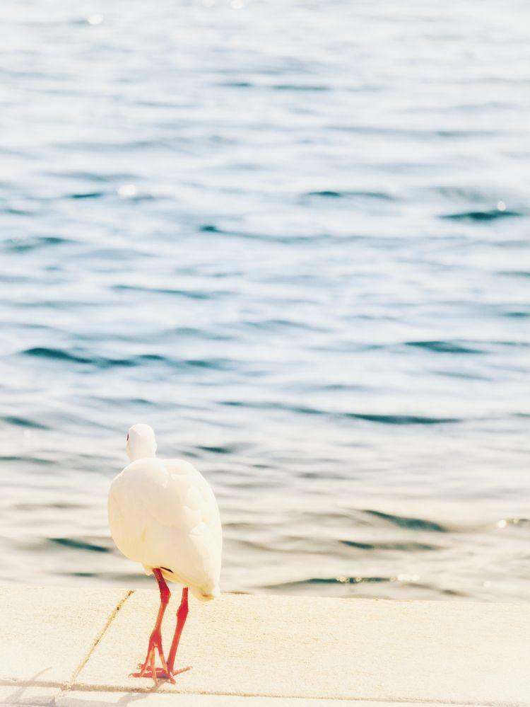 Birds Lake - downtown, orlando, florida - ftlm92 | ello