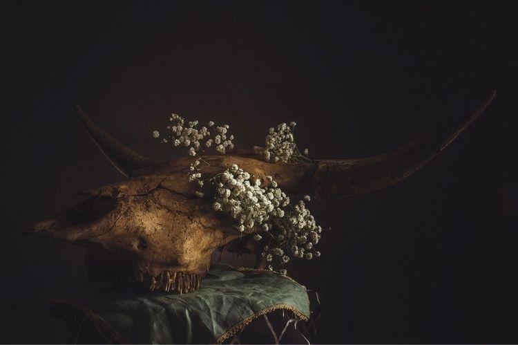 mementomori, naturemorte, vanitas - anjaschutz | ello