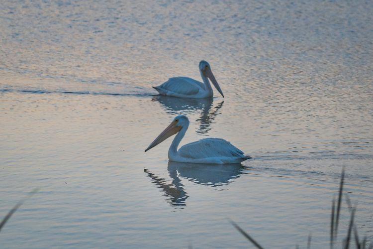 Passing Dawn Dakotas full beaut - jeffmoreau | ello